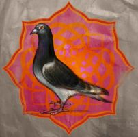 egyptian pigeon by hefne
