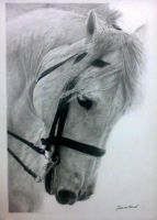 Horse by ivacy