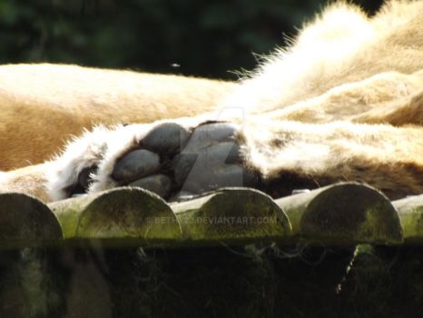 Lion Paw by Bethy23