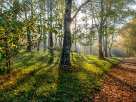 Autumn sun by ChaoticMind75