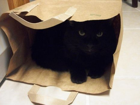 Bag O' Kitty? by darkwinged15