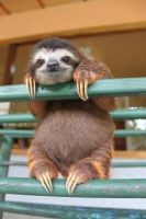 L-the-happiest-baby-sloth by Jirba