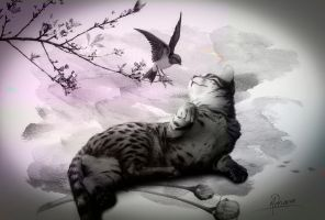 The cat and the little bird by Adriana-Madrid