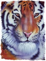 my tiger by MiMitchell