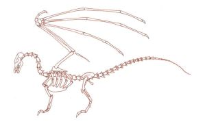 dragon skeleton diagram by Kielrae