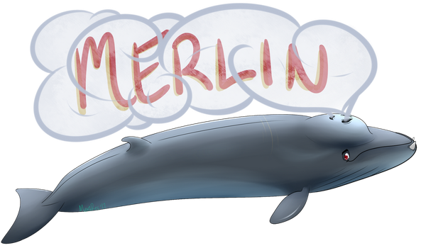 .:Merlin the Experimental Whale:. by MerciResolution