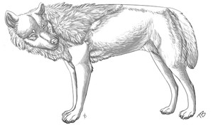 Free Wolf Lineart - Template by Atani1