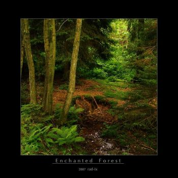 Enchanted Forest by rad-ix