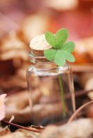 ..Luck.. by Pinepassionmango