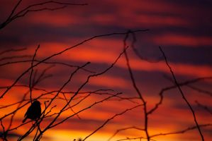 winter sunset---2 by cheah77