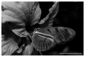 only I think of black and white by Jimmasterpieces