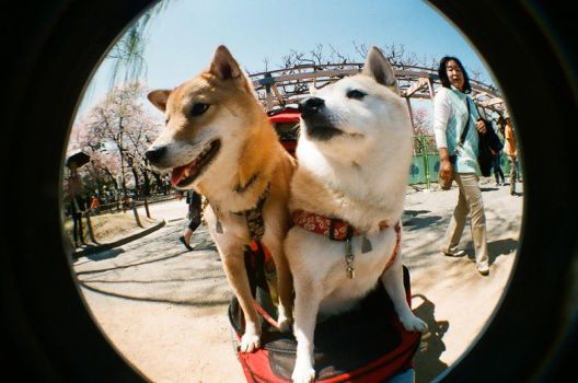 Two cute dogs by sushihan