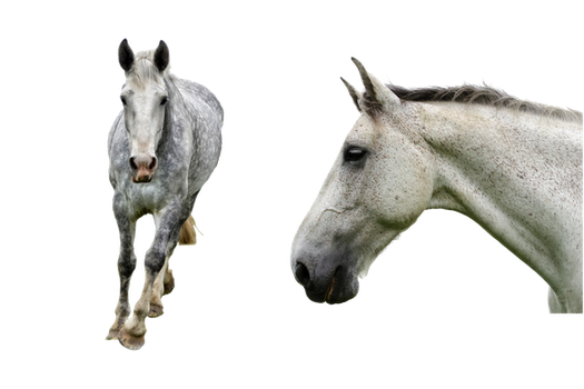 Horse Duo PNG by chaseandlinda