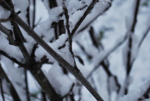 More snow on the branches by ImmortalEmotion