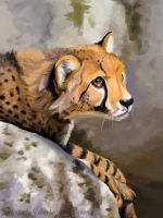 Cheetah by Paintwick