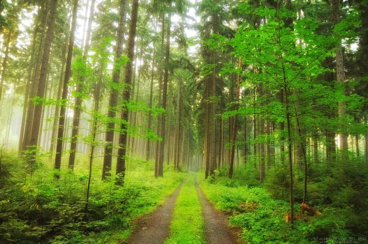 Forest Magic by MarcoHeisler