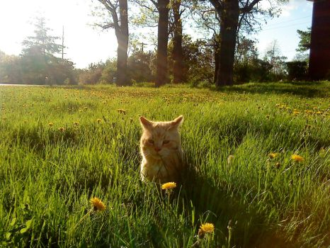 Cats and dandelions 27 by TheCynicalFlowerGirl