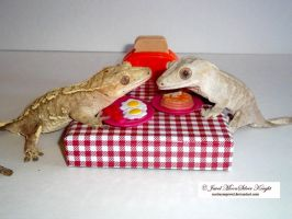 BREAKFAST FOR THE GECKOS! by Heather-Chrysalis