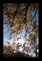 the autumn.. by twighlight86