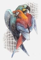 Lost Macaws by caramitten