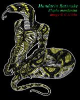 The mandarin of snakes by blackheartedhate