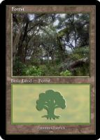 Magic Forest Cumberland Island Photo Card IX by lizking10152011